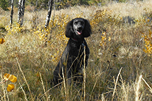 animal-therapy-golden-colorado